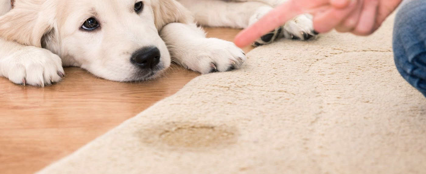Pet Urine and Odor Removal in San Diego